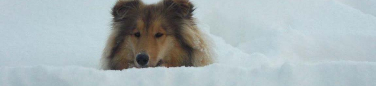 Hofhund Emmi